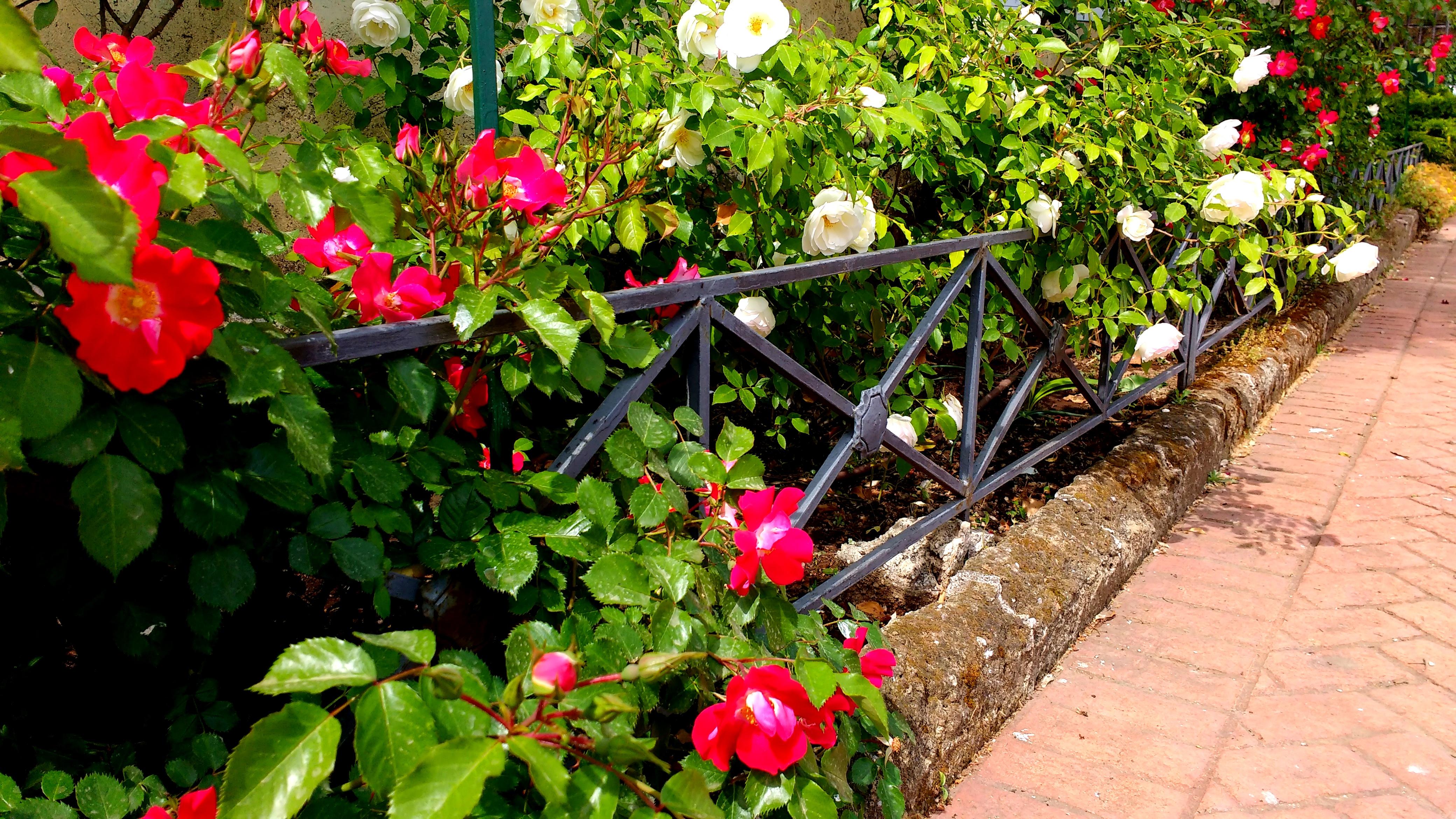 i fiori del parco